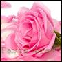 odpowiedniki perfum z kwiata róży